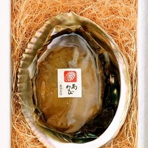 【09】恵比寿鮑 特大鮑1個入(150g以上) 冷蔵直送